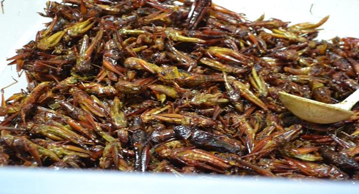 belalang goreng