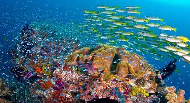Species ikan di raja ampat